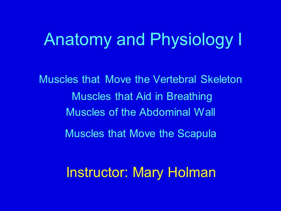 Anatomy and Physiology I Muscles that Move the Vertebral Skeleton Muscles that Aid in Breathing Muscles of the Abdominal Wall Muscles that Move the Sc