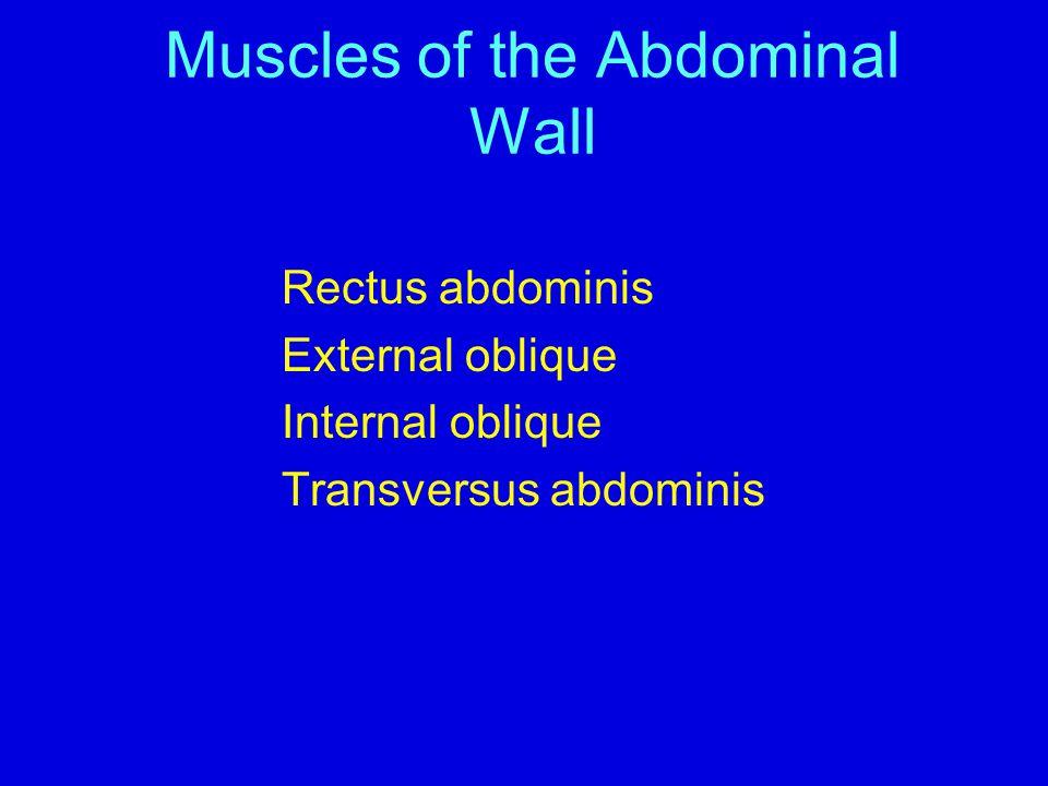 Muscles of the Abdominal Wall Rectus abdominis External oblique Internal oblique Transversus abdominis