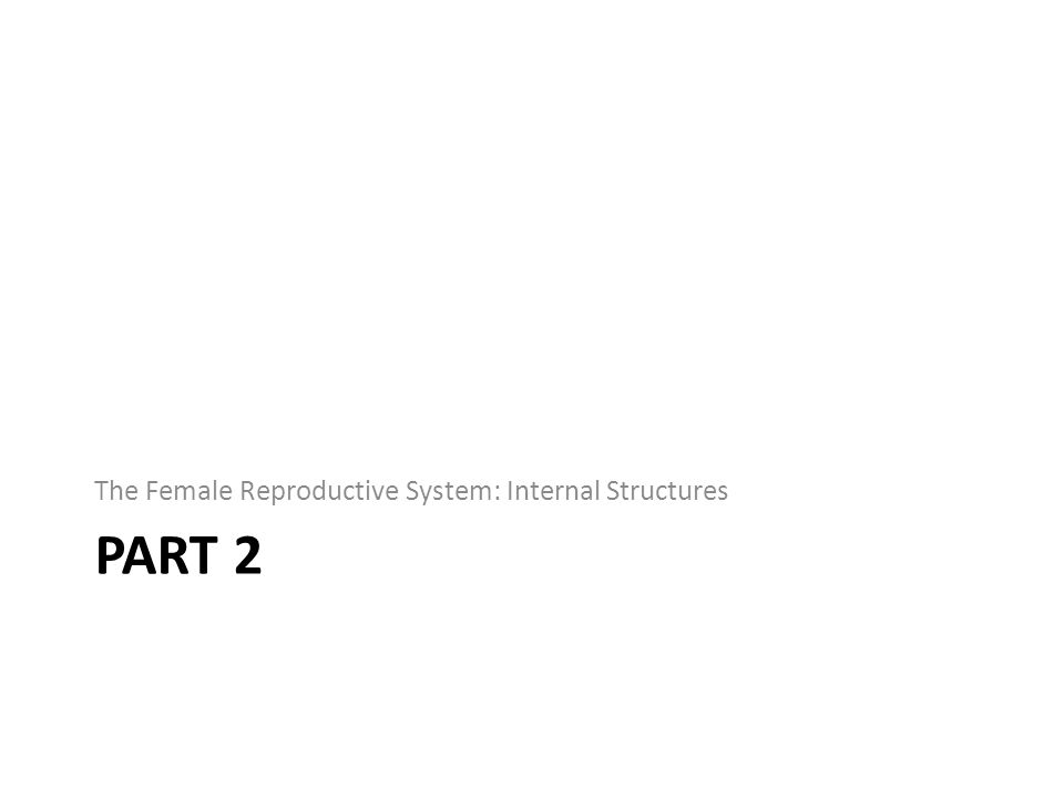 PART 2 The Female Reproductive System: Internal Structures