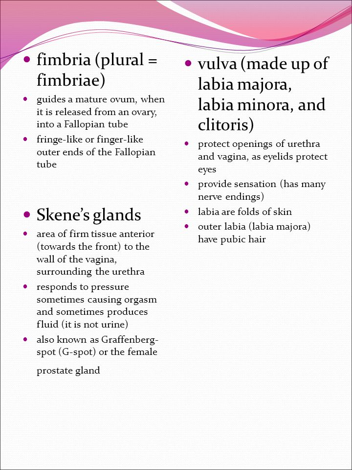 fimbria (plural = fimbriae) guides a mature ovum, when it is released from an ovary, into a Fallopian tube fringe-like or finger-like outer ends of th