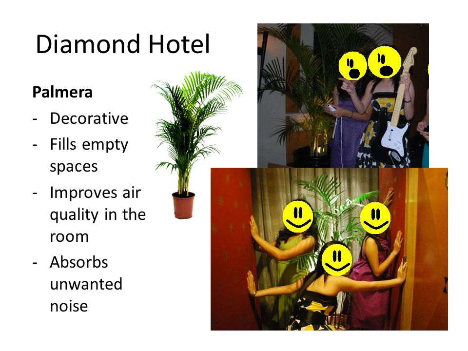 Diamond Hotel Palmera -Decorative -Fills empty spaces -Improves air quality in the room -Absorbs unwanted noise