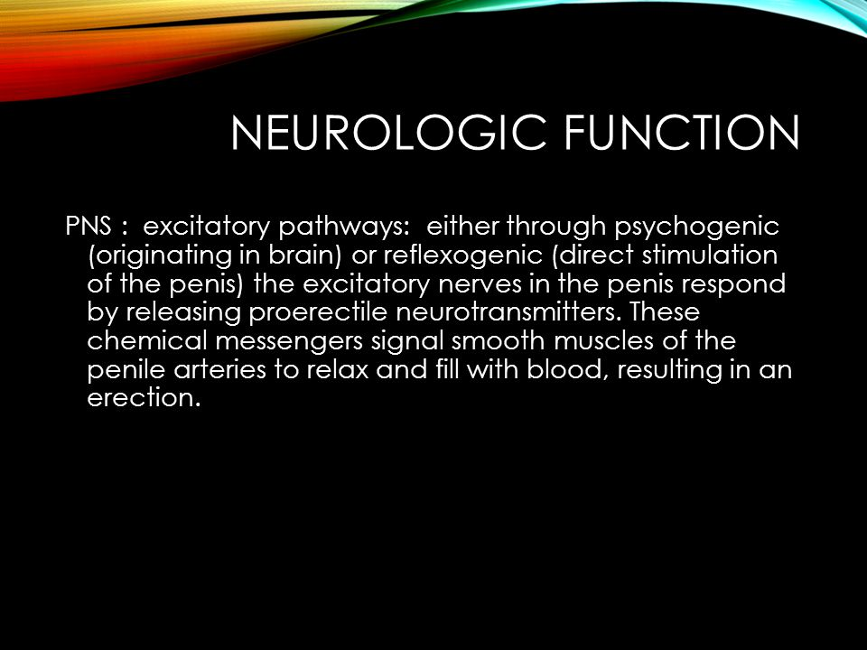 NEUROLOGIC FUNCTION PNS : excitatory pathways: either through psychogenic (originating in brain) or reflexogenic (direct stimulation of the penis) the excitatory nerves in the penis respond by releasing proerectile neurotransmitters.