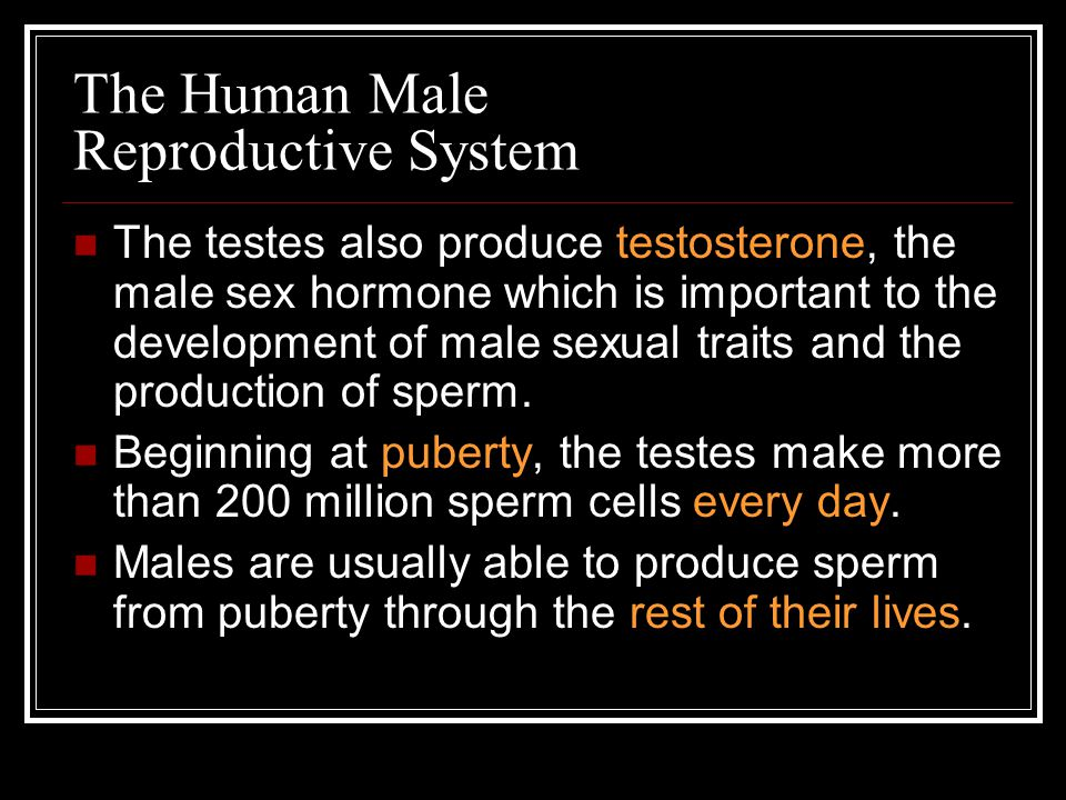 The Human Male Reproductive System The penis is the external male organ which delivers the sperm to the female body.