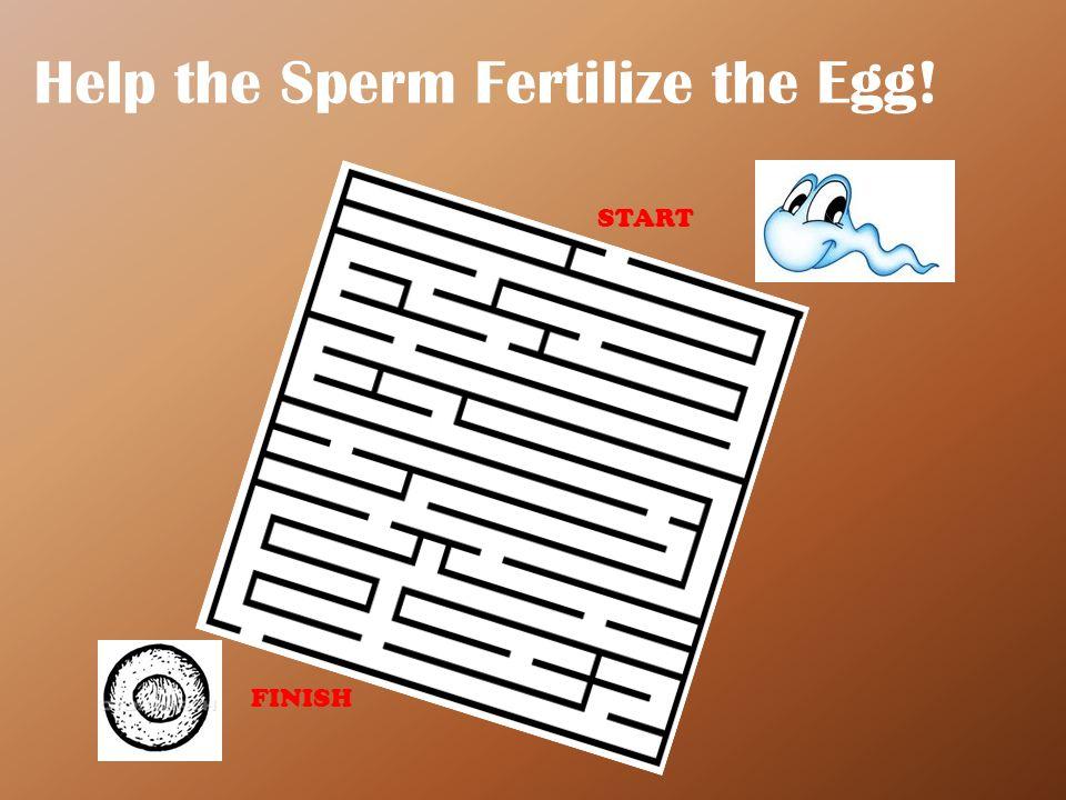 Sperm's Journey Mapped Out! START FINISH
