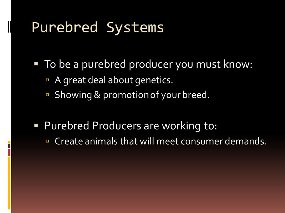 Purebred Systems  To be a purebred producer you must know:  A great deal about genetics.  Showing & promotion of your breed.  Purebred Producers a