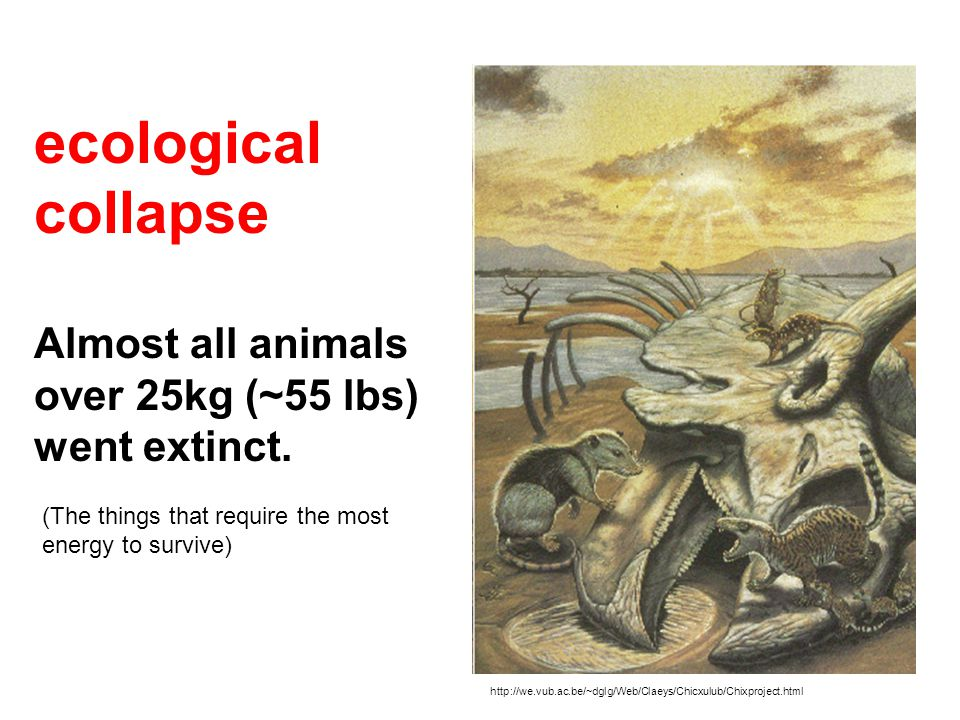 http://we.vub.ac.be/~dglg/Web/Claeys/Chicxulub/Chixproject.html ecological collapse Almost all animals over 25kg (~55 lbs) went extinct. (The things t