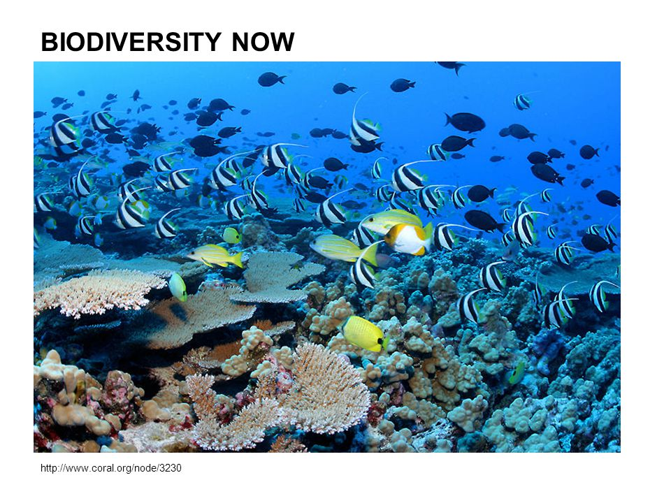 BIODIVERSITY NOW http://www.coral.org/node/3230