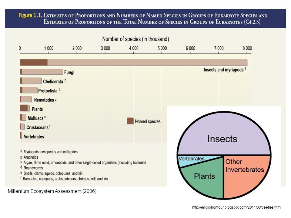 Millenium Ecosystem Assessment (2006) http://englishontour.blogspot.com/2011/03/beetles.html