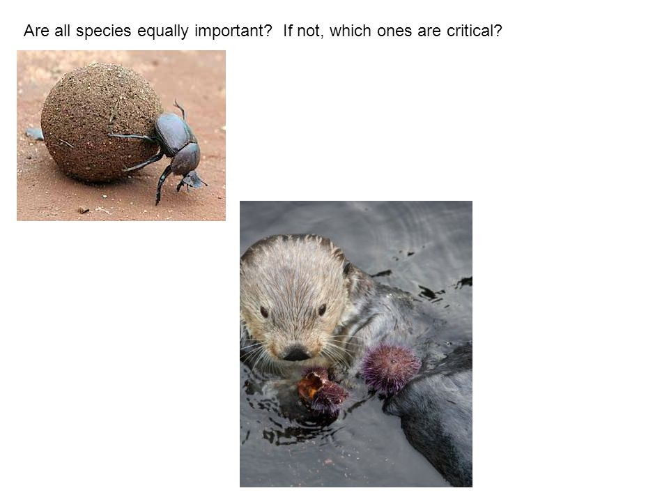 Are all species equally important If not, which ones are critical