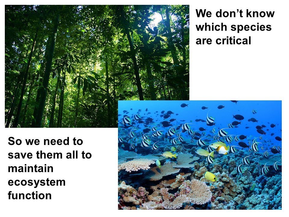 We don't know which species are critical So we need to save them all to maintain ecosystem function
