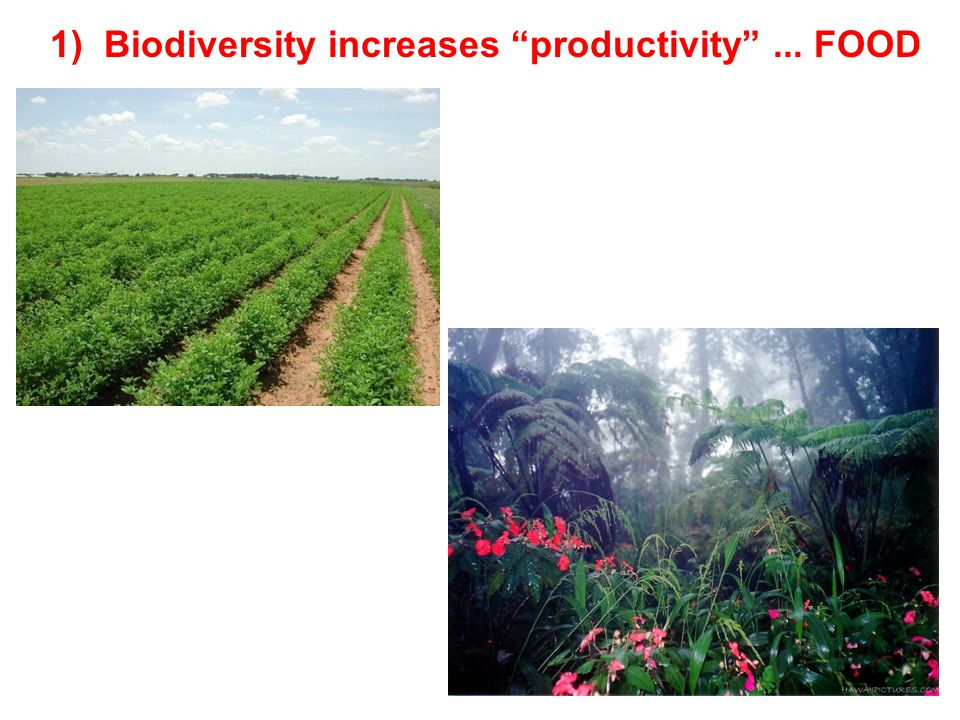 1) Biodiversity increases productivity ... FOOD