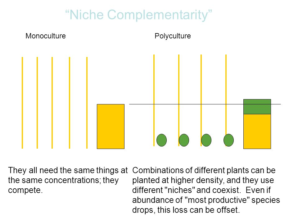 MonoculturePolyculture Combinations of different plants can be planted at higher density, and they use different niches and coexist.