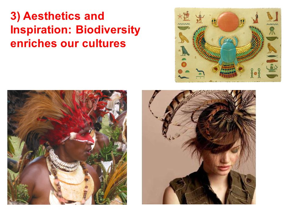 3) Aesthetics and Inspiration: Biodiversity enriches our cultures