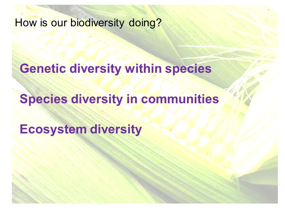 How is our biodiversity doing? Genetic diversity within species Species diversity in communities Ecosystem diversity
