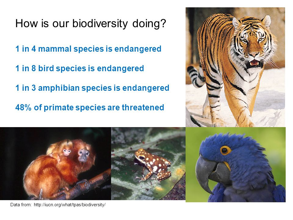 How is our biodiversity doing? 1 in 4 mammal species is endangered 1 in 8 bird species is endangered 1 in 3 amphibian species is endangered 48% of pri