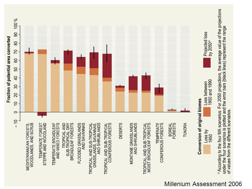 Millenium Assessment 2006