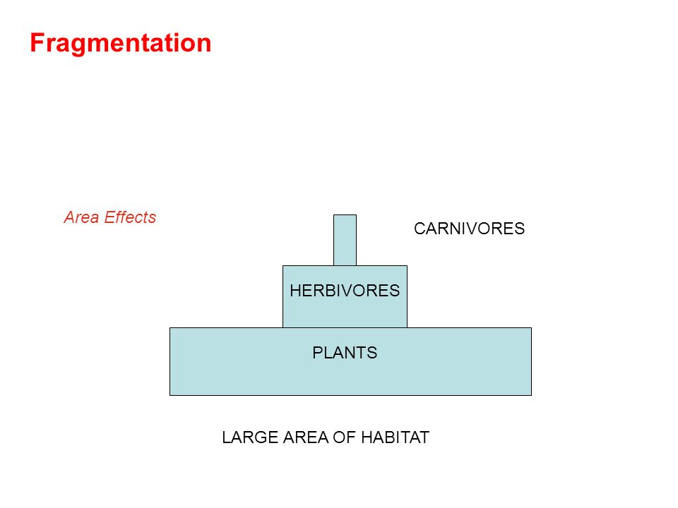 PLANTS HERBIVORES CARNIVORES LARGE AREA OF HABITAT Area Effects Fragmentation