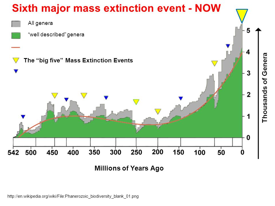 "All genera ""well described"" genera The ""big five"" Mass Extinction Events http://en.wikipedia.org/wiki/File:Phanerozoic_biodiversity_blank_01.png Milli"