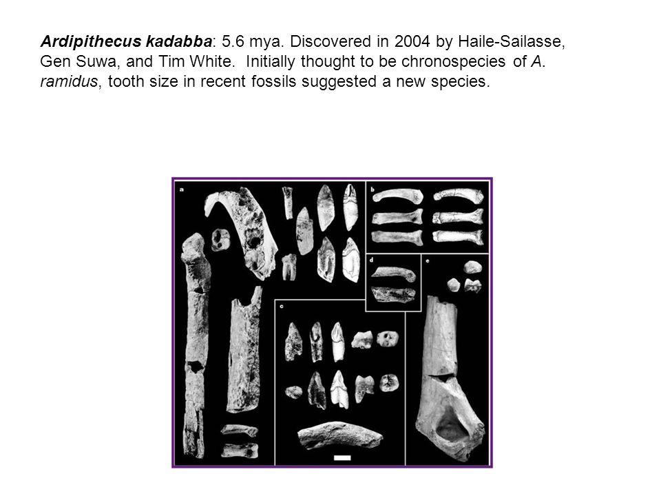 Ardipithecus kadabba: 5.6 mya. Discovered in 2004 by Haile-Sailasse, Gen Suwa, and Tim White.