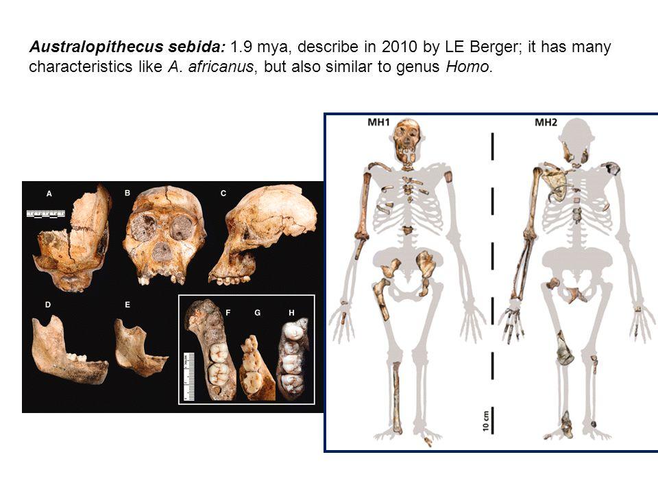 Australopithecus sebida: 1.9 mya, describe in 2010 by LE Berger; it has many characteristics like A.