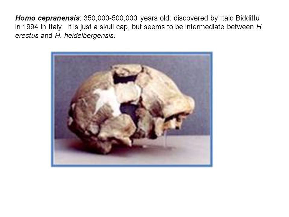 Homo cepranensis: 350,000-500,000 years old; discovered by Italo Biddittu in 1994 in Italy.