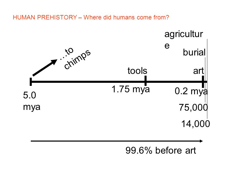 5.0 mya 1.75 mya tools art 0.2 mya burial 75,000 agricultur e 14,000 …to chimps 99.6% before art HUMAN PREHISTORY – Where did humans come from