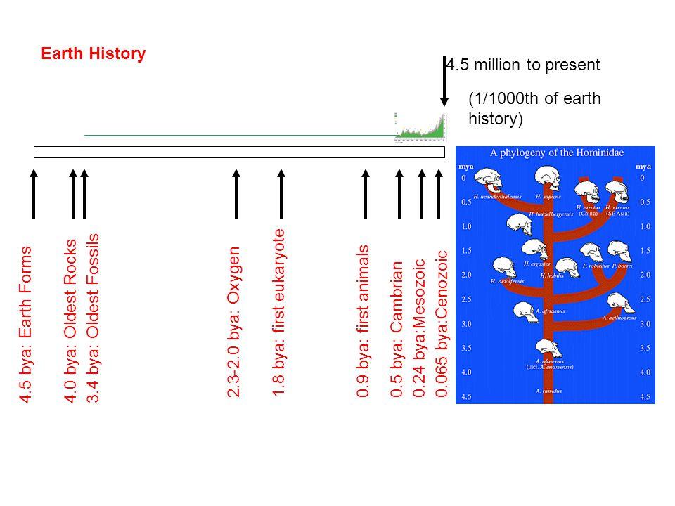 Earth History 4.5 bya: Earth Forms4.0 bya: Oldest Rocks3.4 bya: Oldest Fossils 2.3-2.0 bya: Oxygen 1.8 bya: first eukaryote 0.9 bya: first animals 0.5 bya: Cambrian0.24 bya:Mesozoic0.065 bya:Cenozoic 4.5 million to present (1/1000th of earth history)