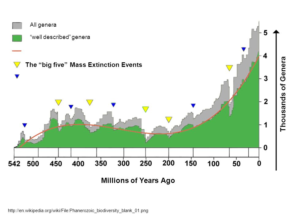 All genera well described genera The big five Mass Extinction Events http://en.wikipedia.org/wiki/File:Phanerozoic_biodiversity_blank_01.png Millions of Years Ago Thousands of Genera