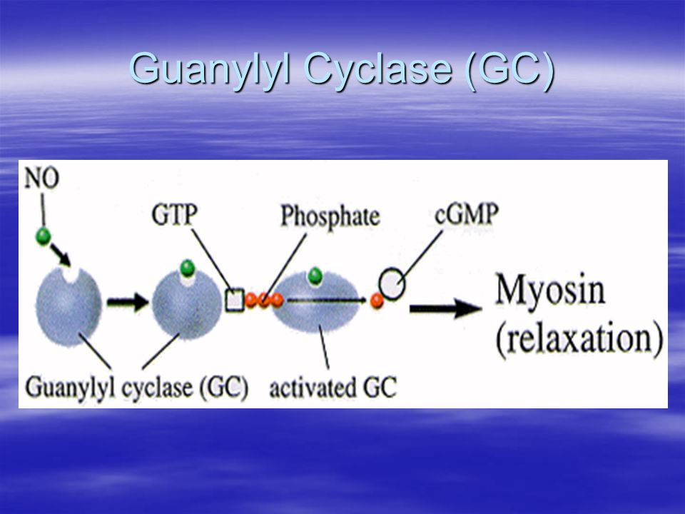 Guanylyl Cyclase (GC)