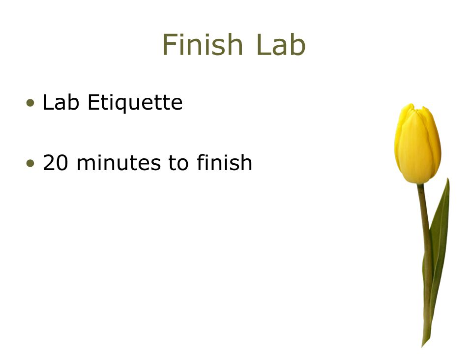 Finish Lab Lab Etiquette 20 minutes to finish