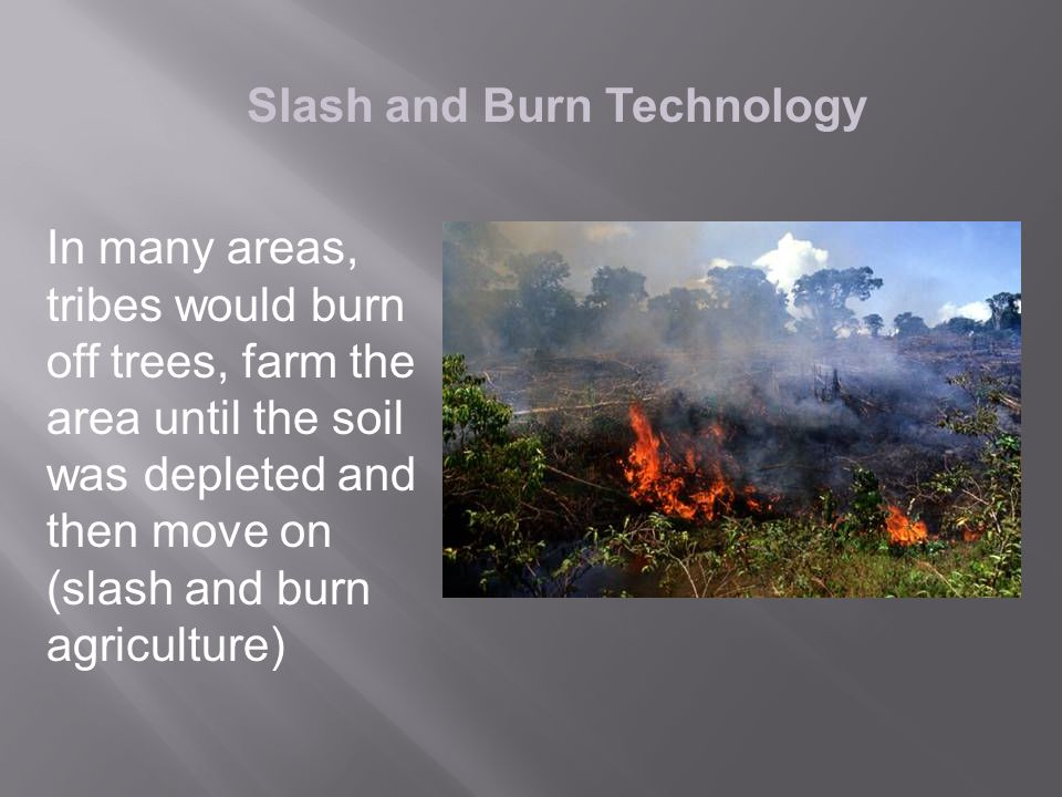 Slash and Burn Technology In many areas, tribes would burn off trees, farm the area until the soil was depleted and then move on (slash and burn agriculture)