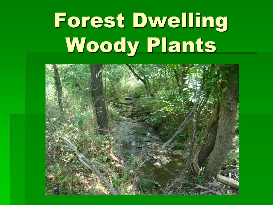 Forest Dwelling Woody Plants