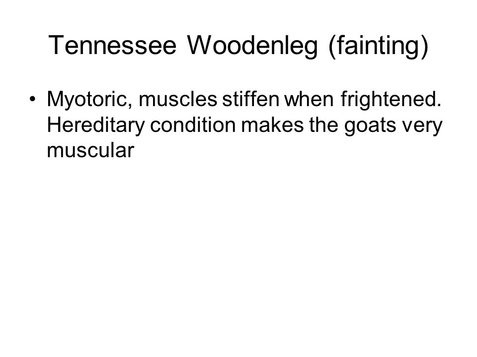 Tennessee Woodenleg (fainting) Myotoric, muscles stiffen when frightened. Hereditary condition makes the goats very muscular