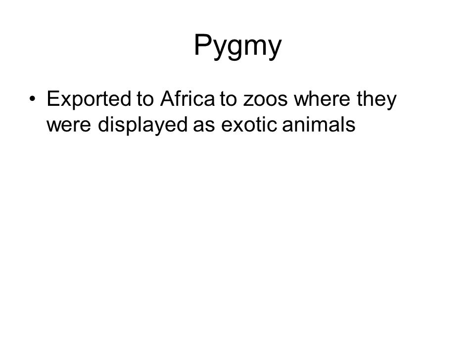 Pygmy Exported to Africa to zoos where they were displayed as exotic animals