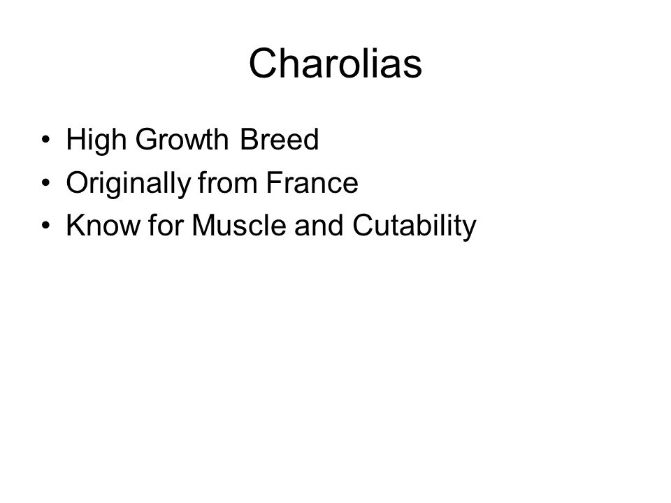 Charolias High Growth Breed Originally from France Know for Muscle and Cutability