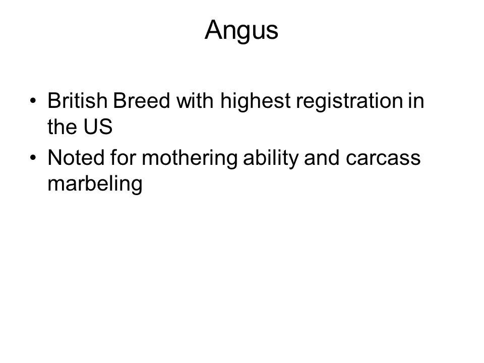 Angus British Breed with highest registration in the US Noted for mothering ability and carcass marbeling