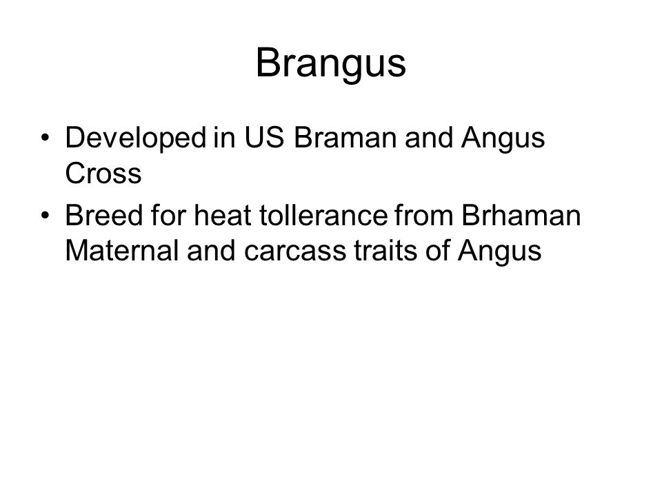 Brangus Developed in US Braman and Angus Cross Breed for heat tollerance from Brhaman Maternal and carcass traits of Angus