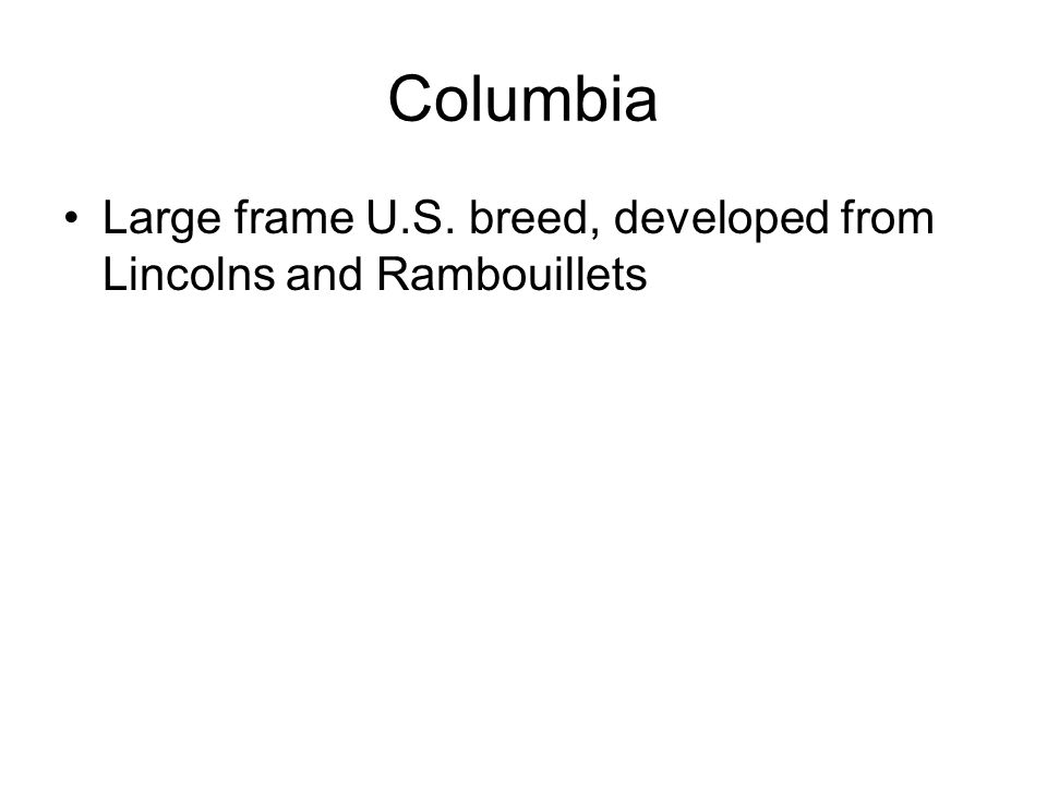 Columbia Large frame U.S. breed, developed from Lincolns and Rambouillets