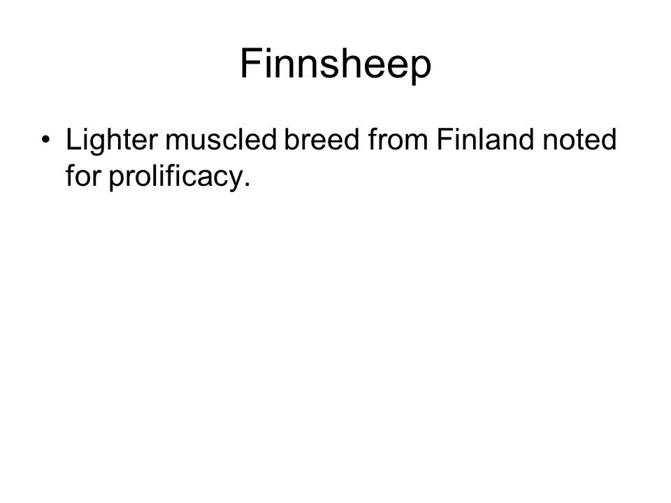 Finnsheep Lighter muscled breed from Finland noted for prolificacy.
