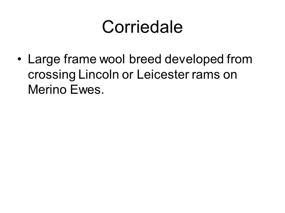 Corriedale Large frame wool breed developed from crossing Lincoln or Leicester rams on Merino Ewes.