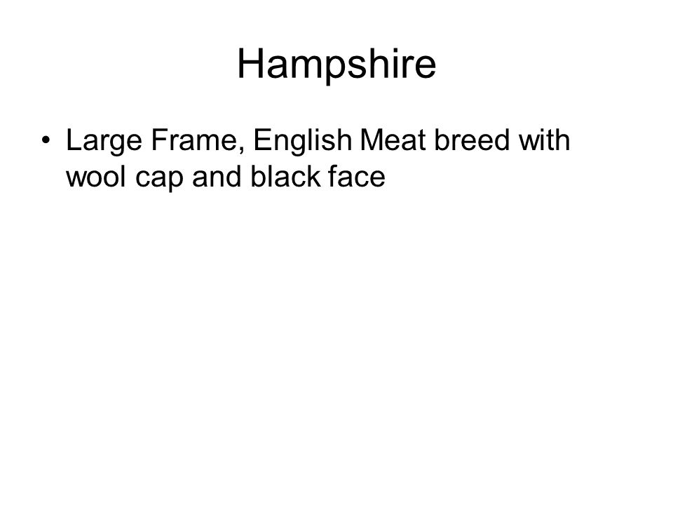 Hampshire Large Frame, English Meat breed with wool cap and black face