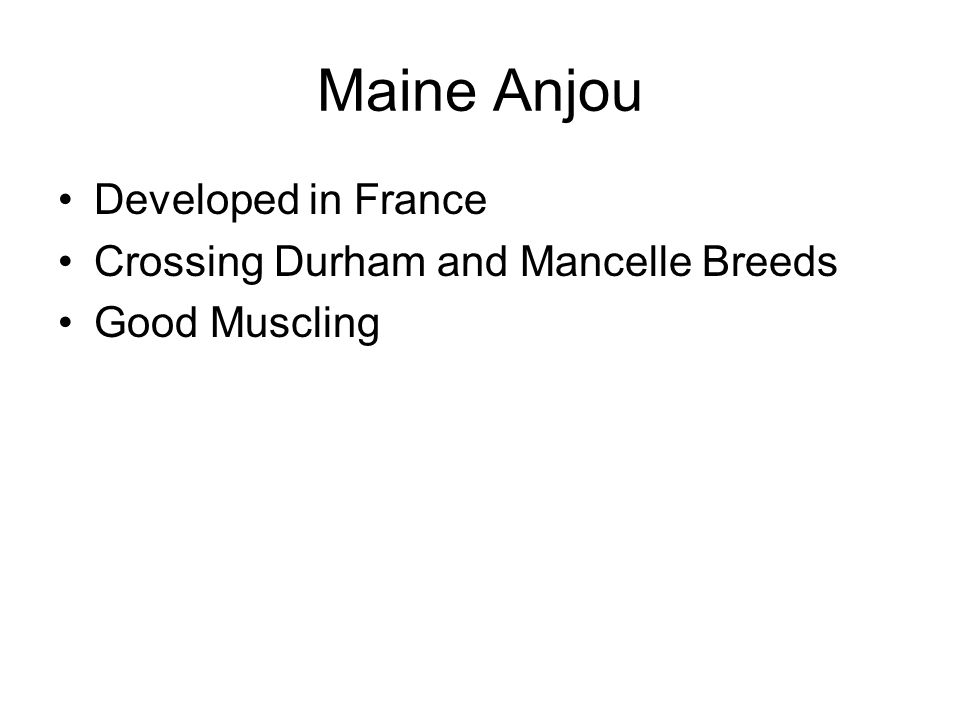 Maine Anjou Developed in France Crossing Durham and Mancelle Breeds Good Muscling