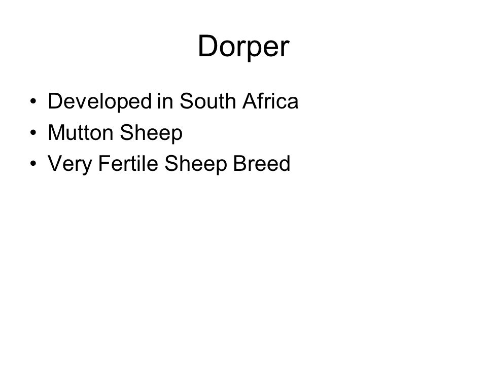 Dorper Developed in South Africa Mutton Sheep Very Fertile Sheep Breed