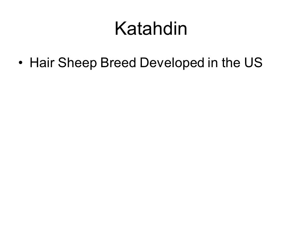 Katahdin Hair Sheep Breed Developed in the US