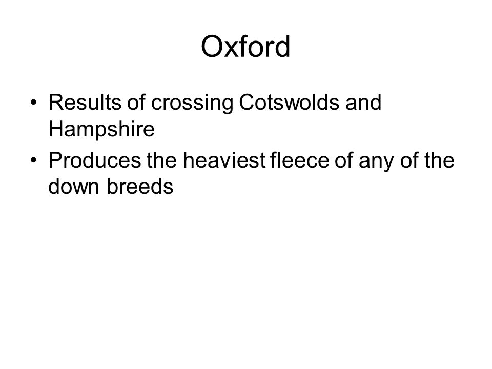 Oxford Results of crossing Cotswolds and Hampshire Produces the heaviest fleece of any of the down breeds