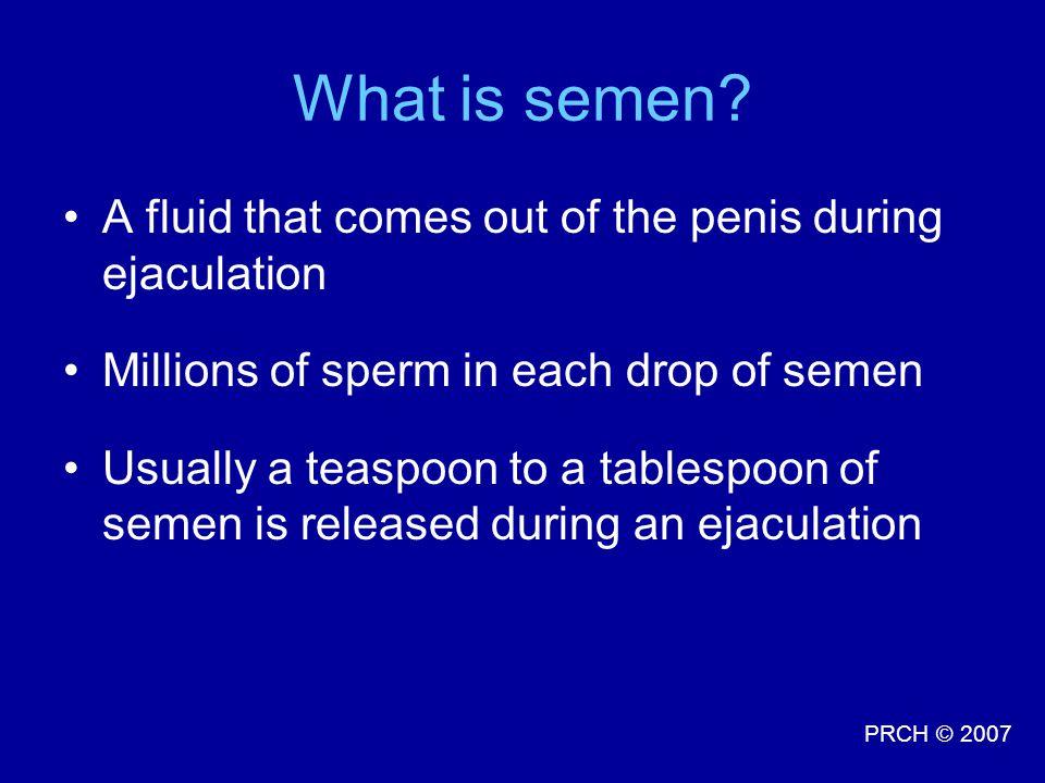 PRCH © 2007 What is semen.