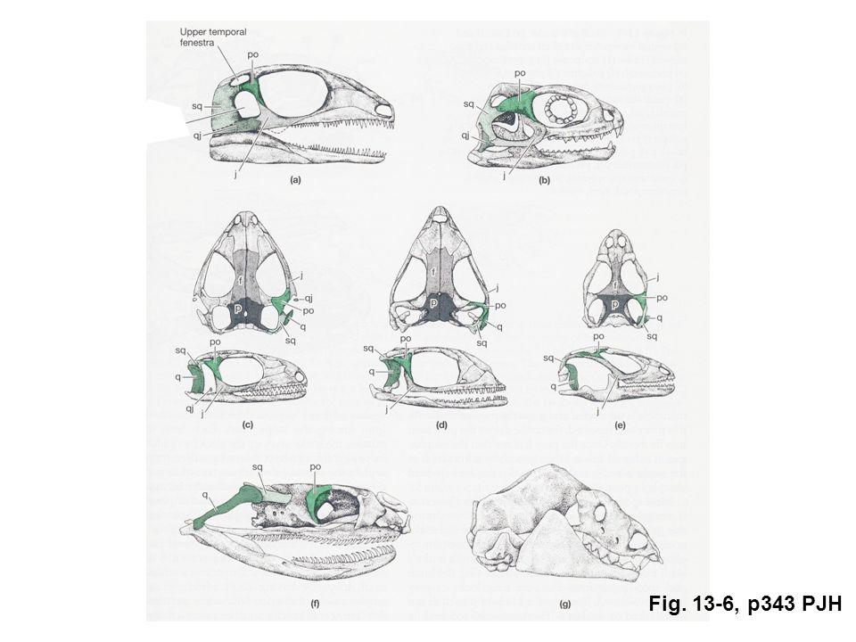 Fig. 13-6, p343 PJH