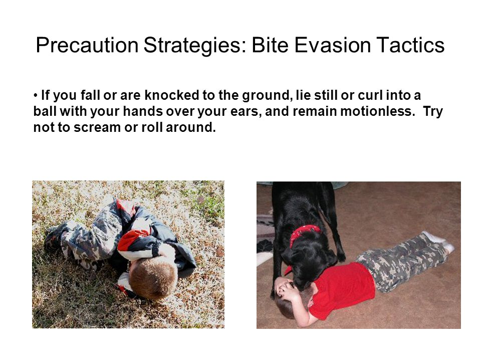 Precaution Strategies: Bite Evasion Tactics If you fall or are knocked to the ground, lie still or curl into a ball with your hands over your ears, an