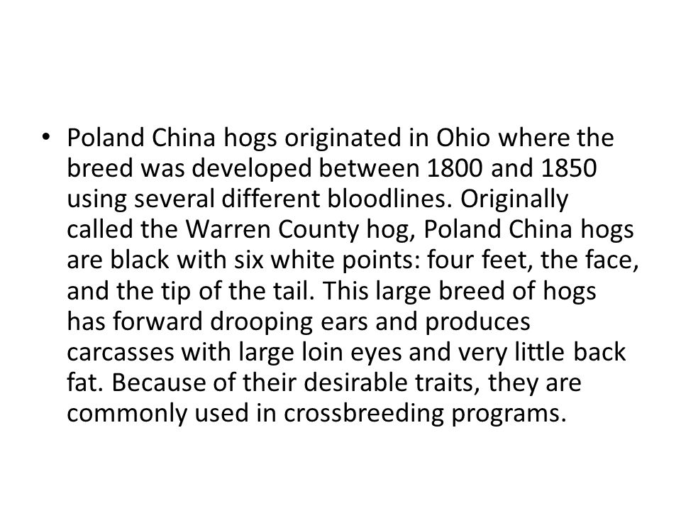 Poland China hogs originated in Ohio where the breed was developed between 1800 and 1850 using several different bloodlines.