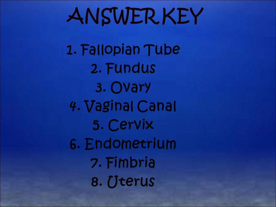 1. Fallopian Tube 2. Fundus 3. Ovary 4. Vaginal Canal 5. Cervix 6. Endometrium 7. Fimbria 8. Uterus